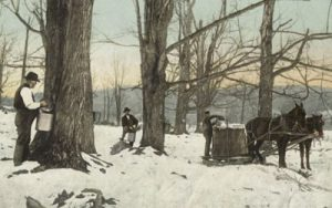 Image of postcard of maple syrup gathering