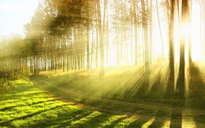 Image of woodland and sun