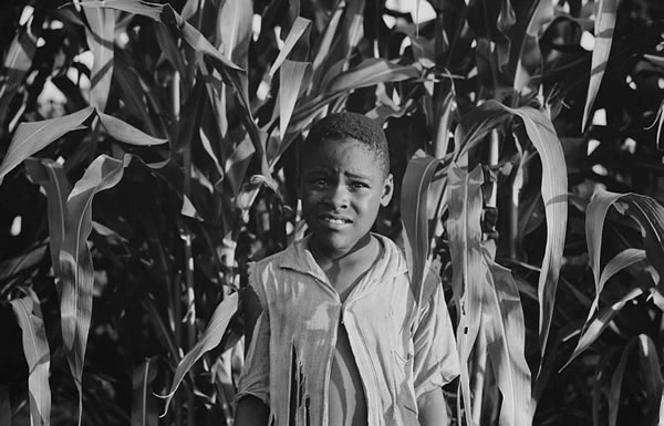 Image of boy in cornfield