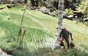 Image of rice farmer in Asia