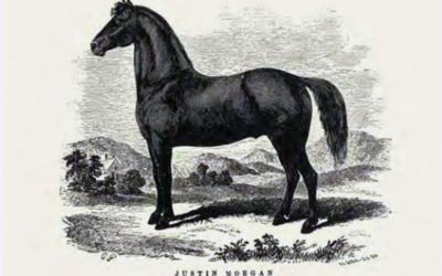 Justin Morgan's Horse: Making an American Myth