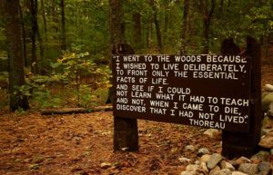 I went to the woods sign in forest