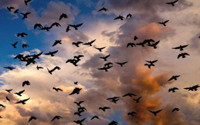 Night Moves: Discovering the Wonders of Bird Migration