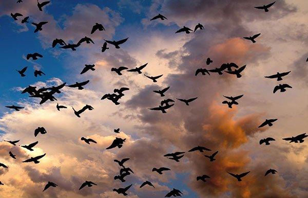 Outlines of birds in darkening sky