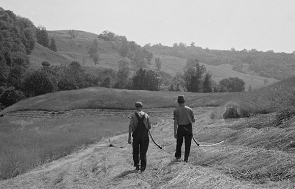Two men walking through hay field with scythes
